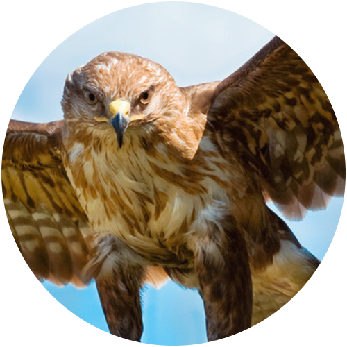 ArcTree HR consulting: eagle circle graphic