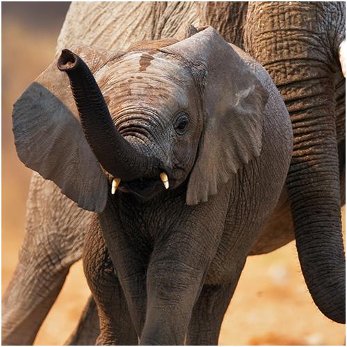 ArcTree HR consulting: elephant circle graphic