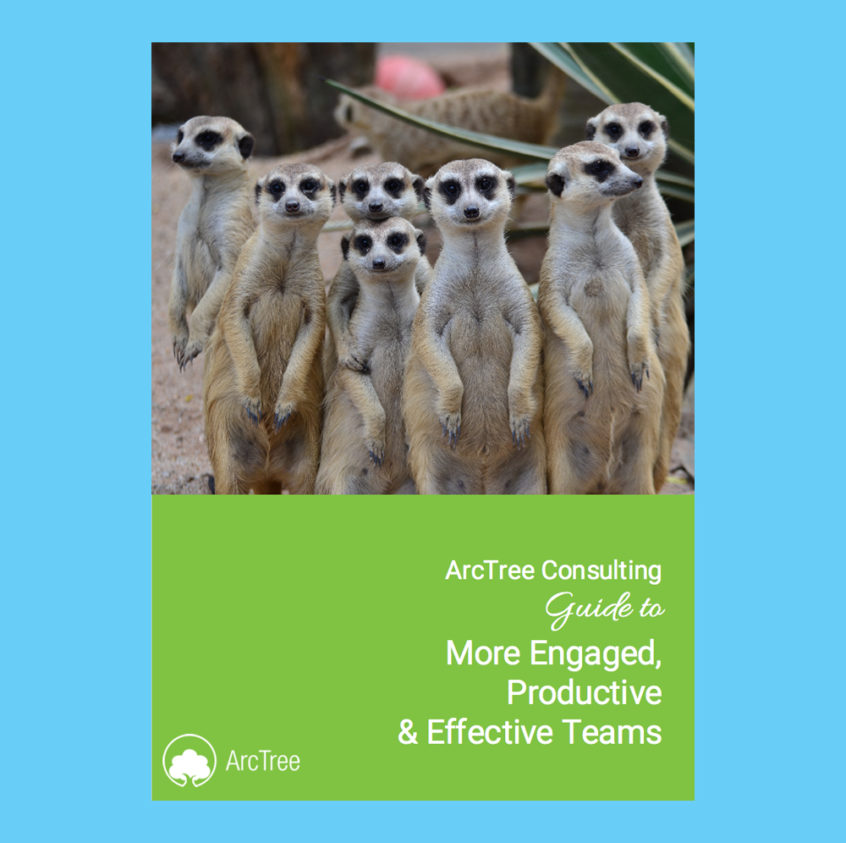 effective teams eBook cover - with a group of meerkats on it!