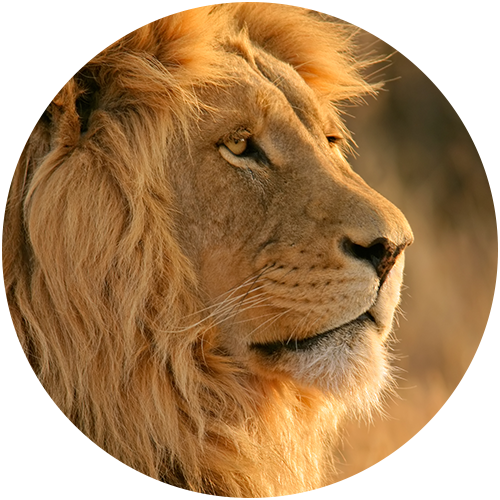 ArcTree HR consulting: lion circle graphic