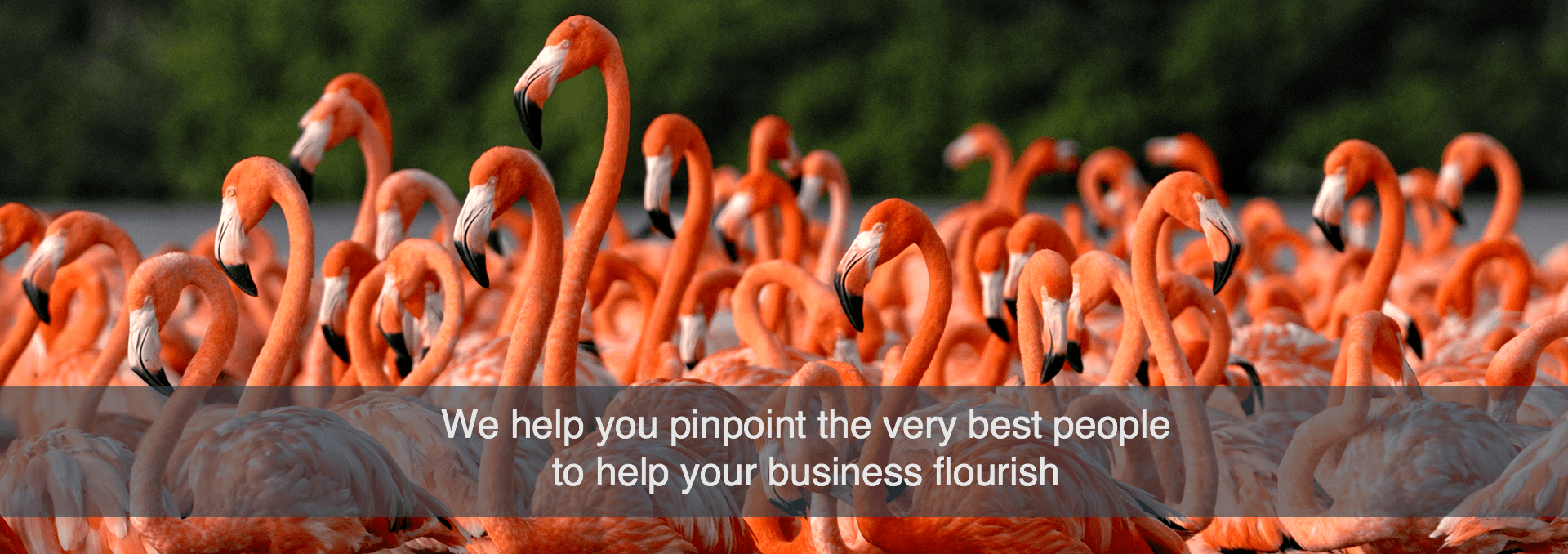 Group of flamingos pinpoint the best people